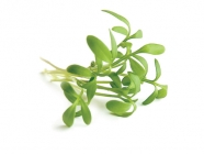 GreekCress