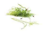 Salad Fennel
