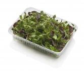 MIX  Micro Salad