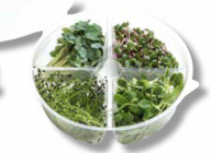 Cress Leaves Mix